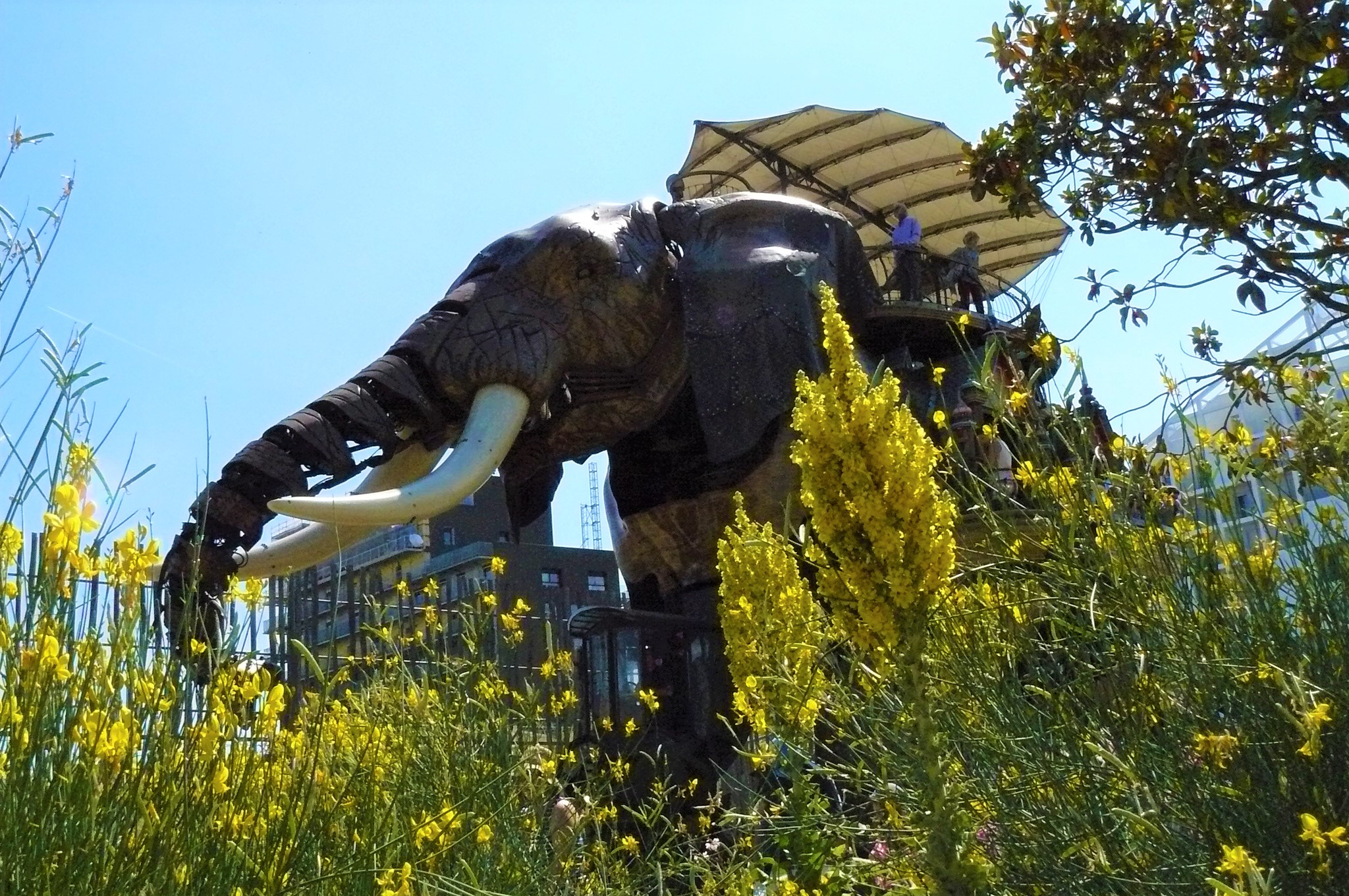 Éléphant en bois de l'Ile aux Machines à Nantes